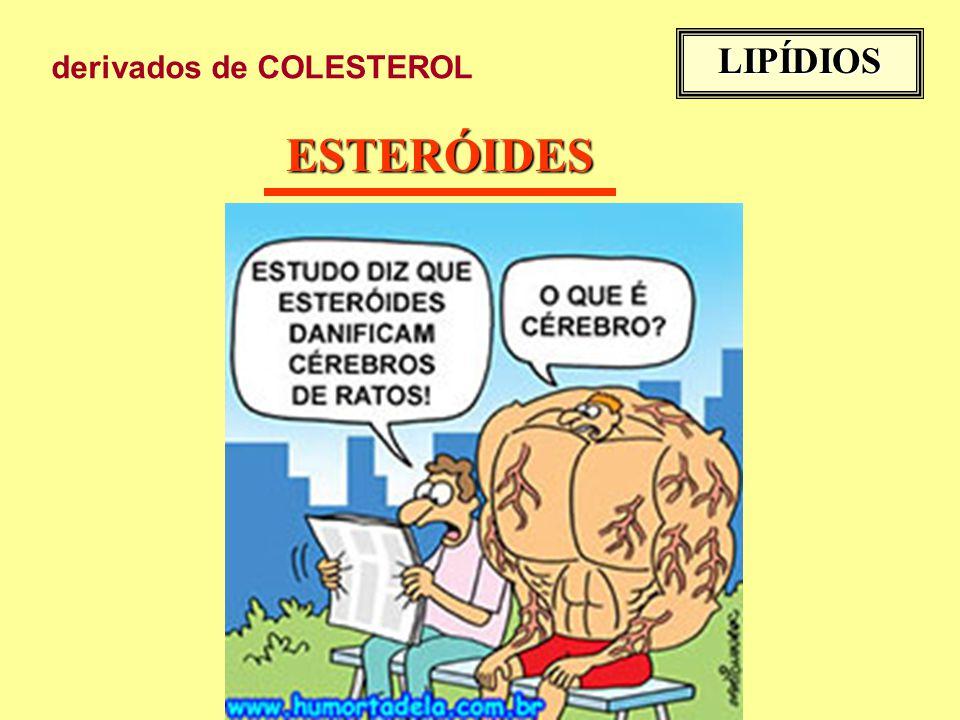 LIPÍDIOS derivados de COLESTEROL ESTERÓIDES