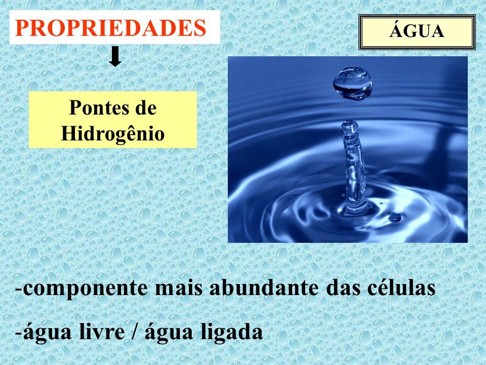 componente mais abundante das células água livre / água ligada