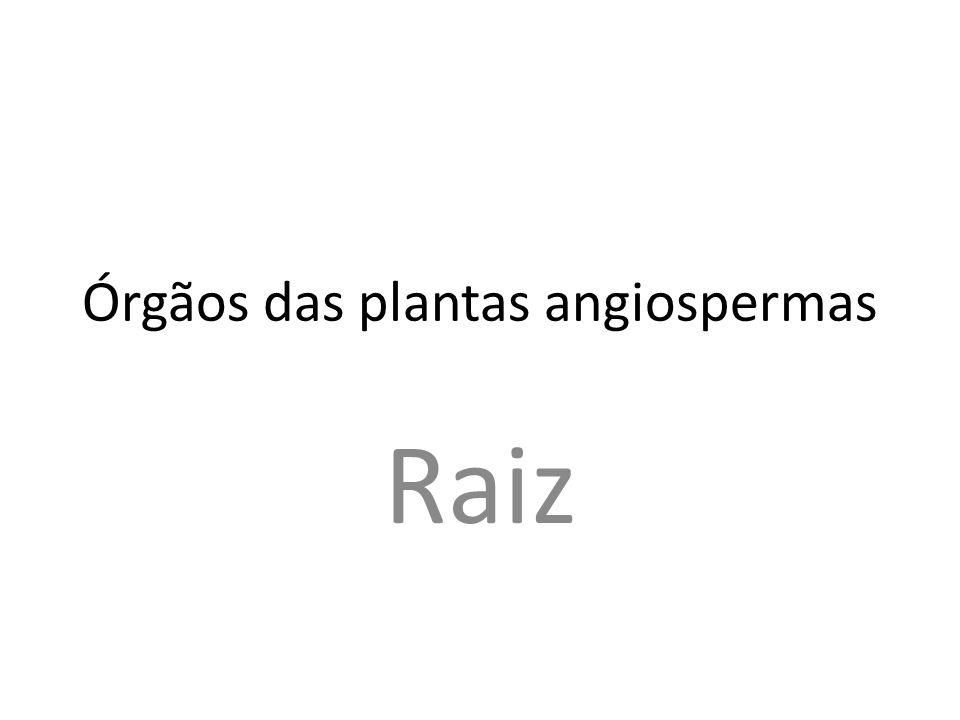 Órgãos das plantas angiospermas
