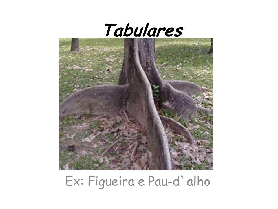 Ex: Figueira e Pau-d`alho