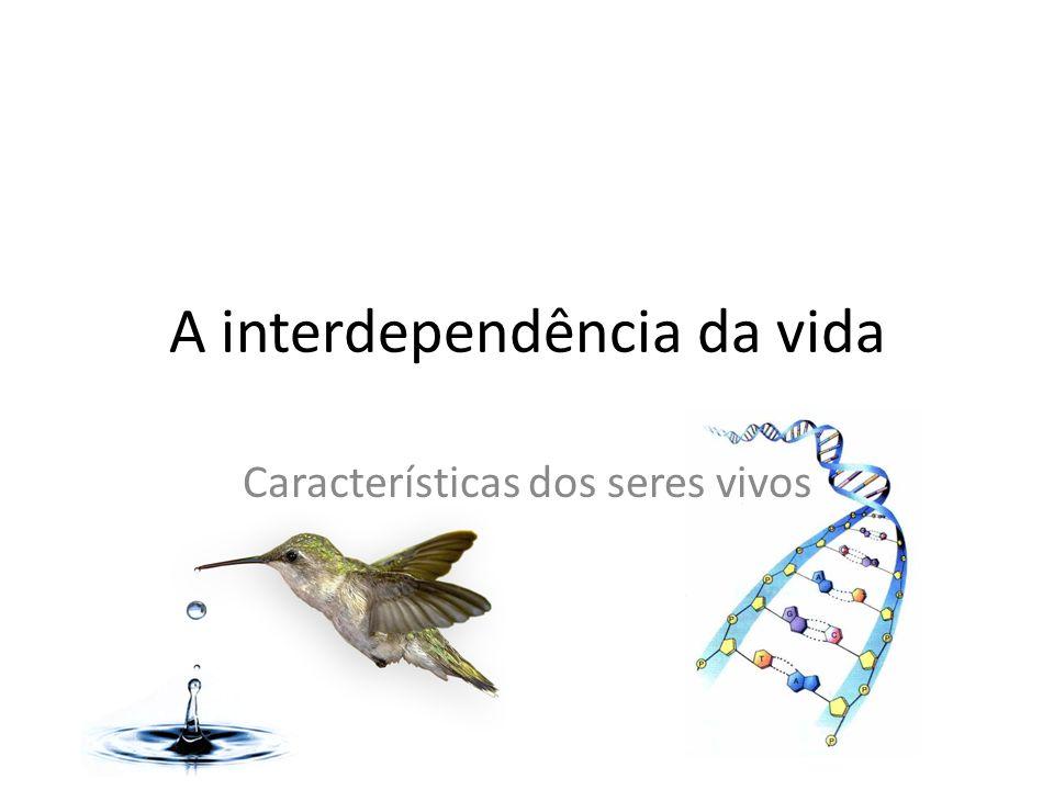A interdependência da vida
