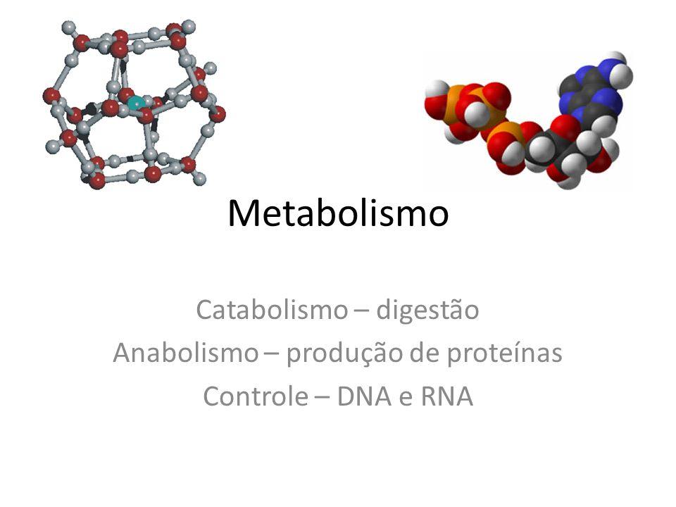 Metabolismo Catabolismo – digestão Anabolismo – produção de proteínas