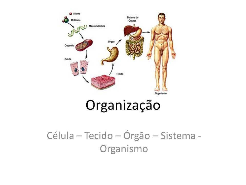 Célula – Tecido – Órgão – Sistema - Organismo
