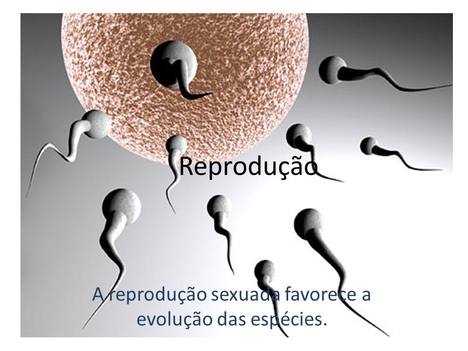 A reprodução sexuada favorece a evolução das espécies.