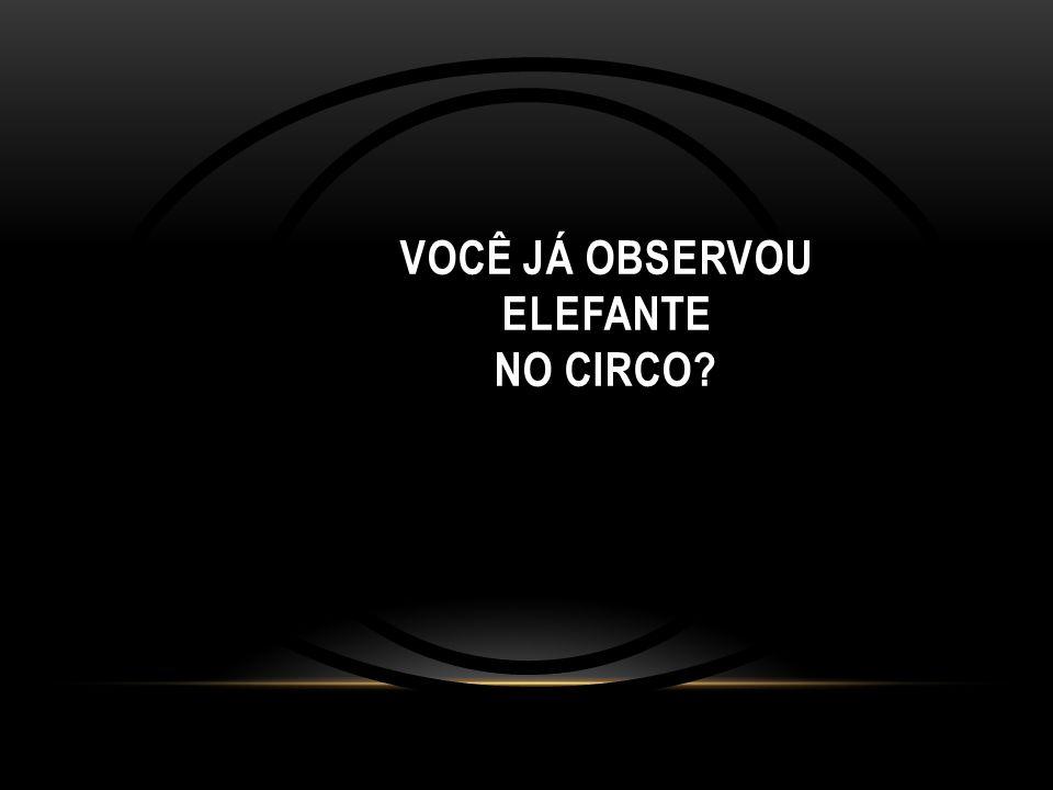VOCÊ JÁ OBSERVOU ELEFANTE NO CIRCO