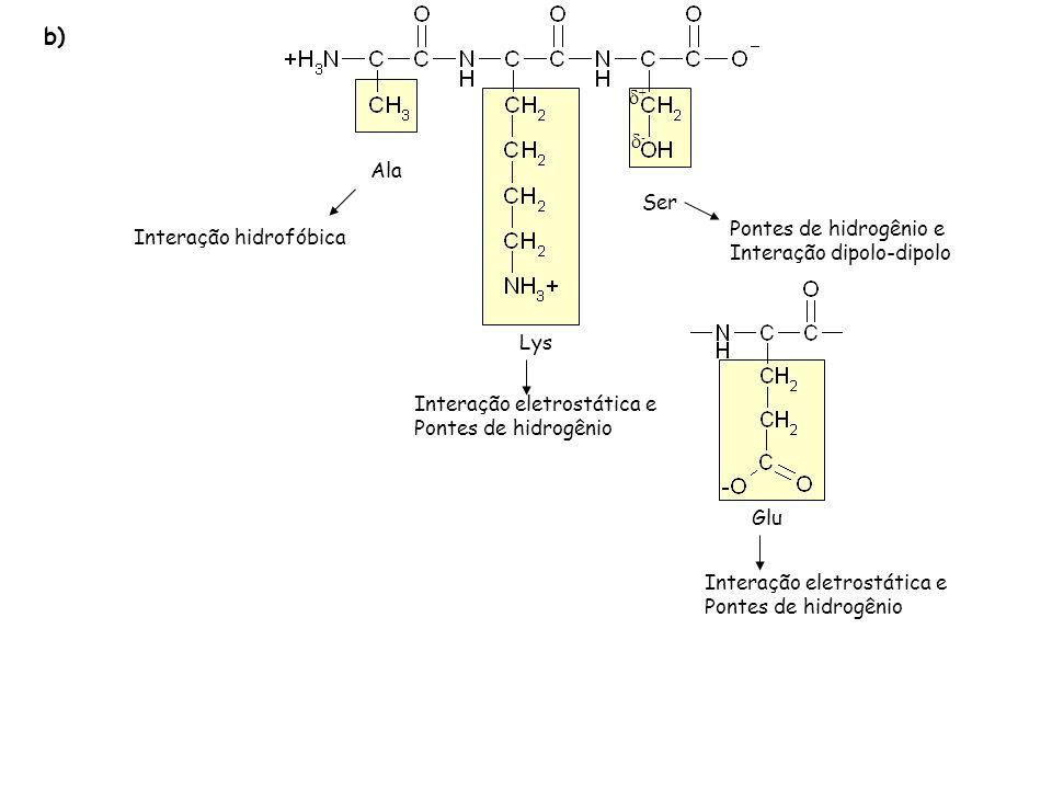 b) + - Ala Ser Pontes de hidrogênio e Interação hidrofóbica