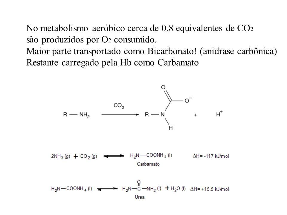 No metabolismo aeróbico cerca de 0.8 equivalentes de CO2