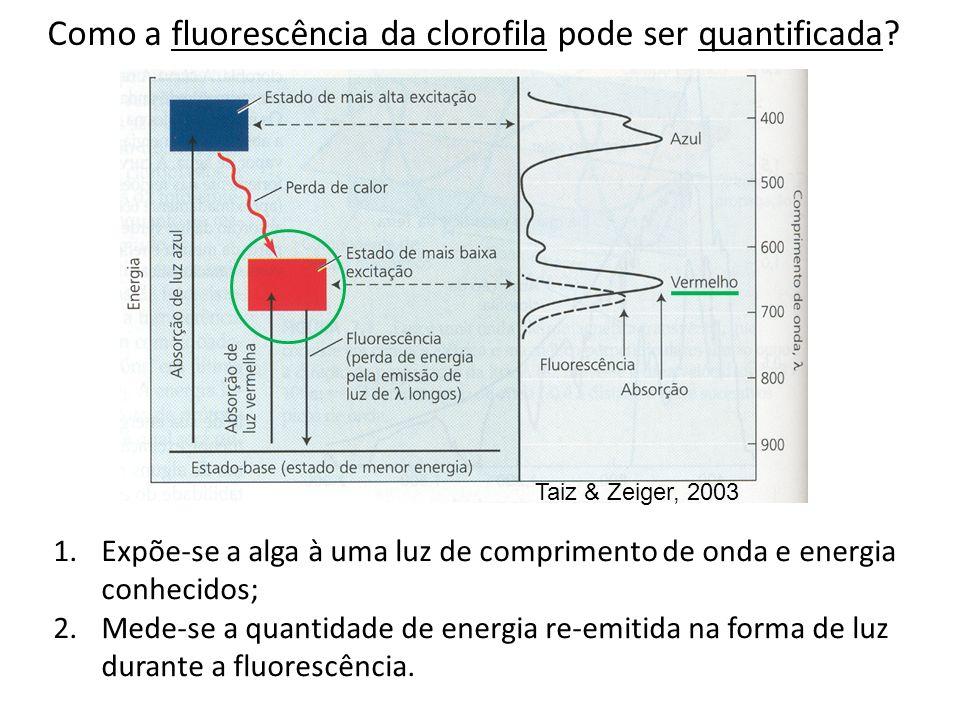 Como a fluorescência da clorofila pode ser quantificada