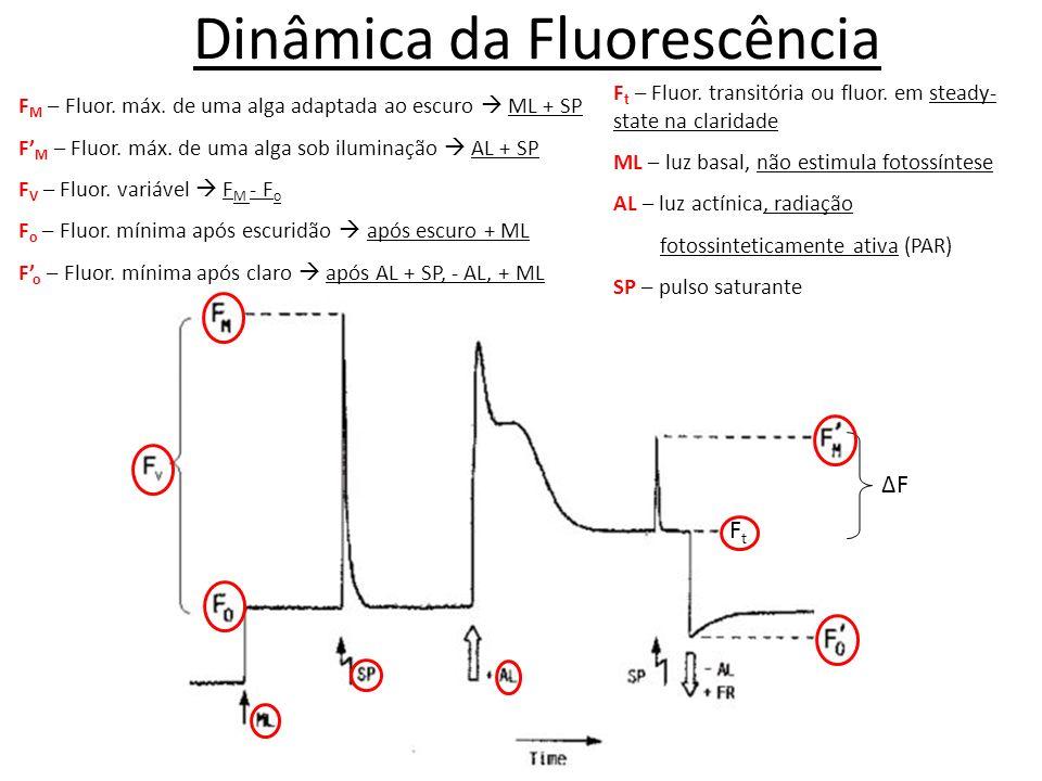 Dinâmica da Fluorescência