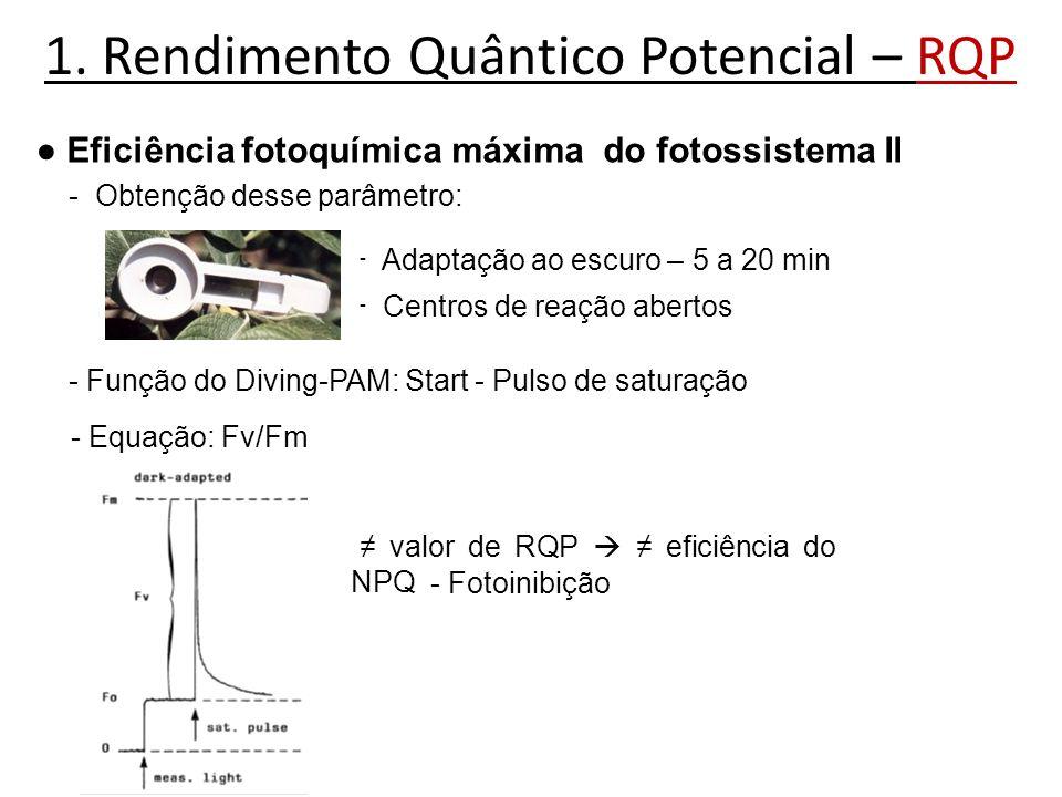 1. Rendimento Quântico Potencial – RQP