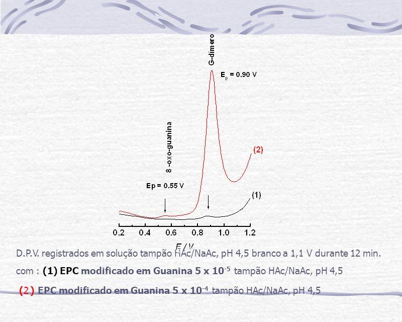 D.P.V. registrados em solução tampão HAc/NaAc, pH 4,5 branco a 1,1 V durante 12 min.