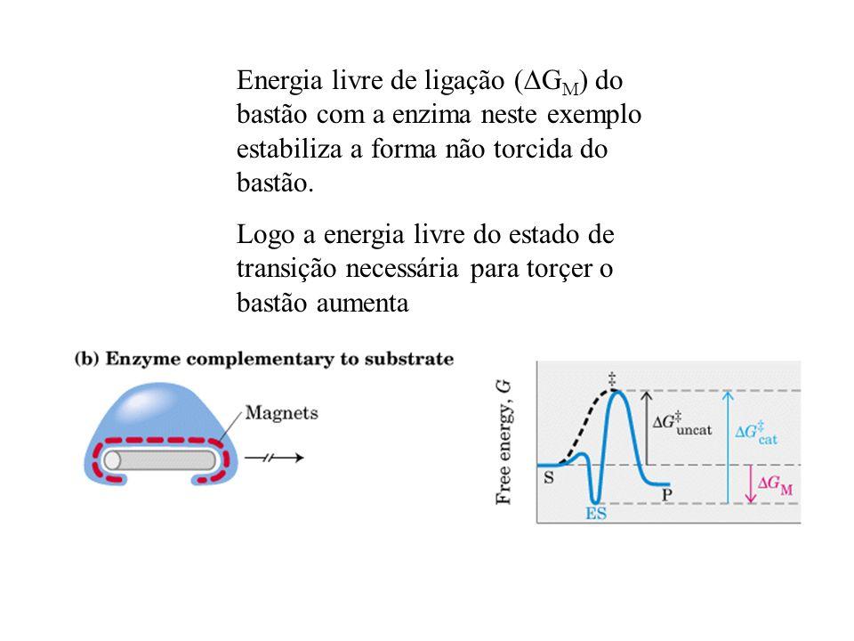 Energia livre de ligação (DGM) do bastão com a enzima neste exemplo estabiliza a forma não torcida do bastão.