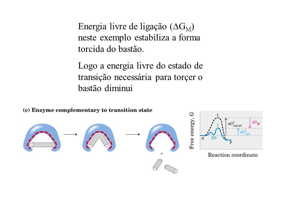 Energia livre de ligação (DGM) neste exemplo estabiliza a forma torcida do bastão.