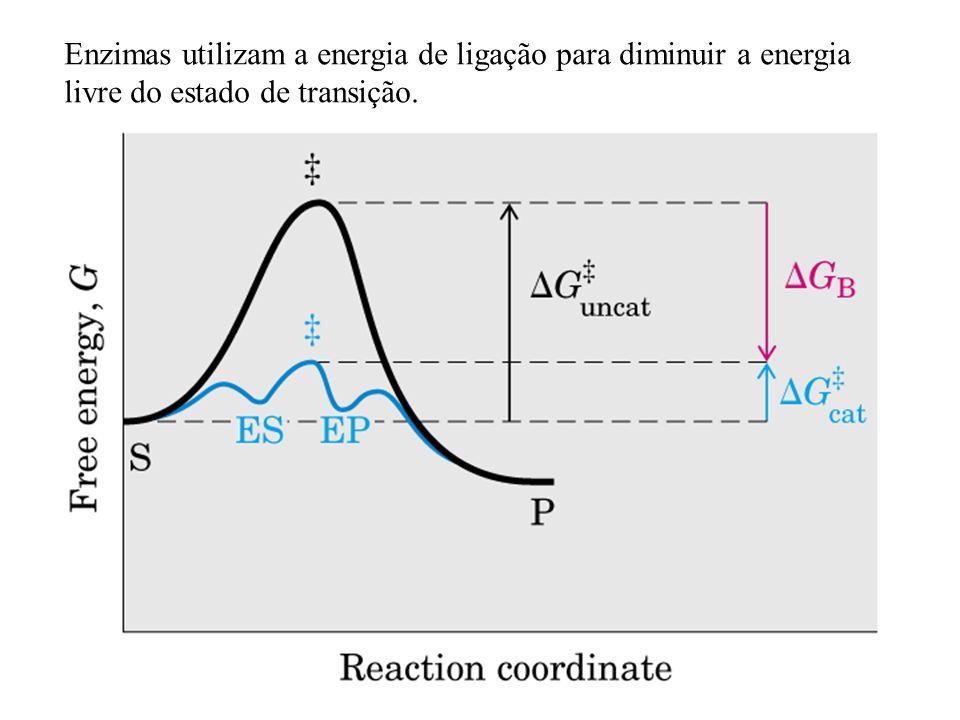 Enzimas utilizam a energia de ligação para diminuir a energia