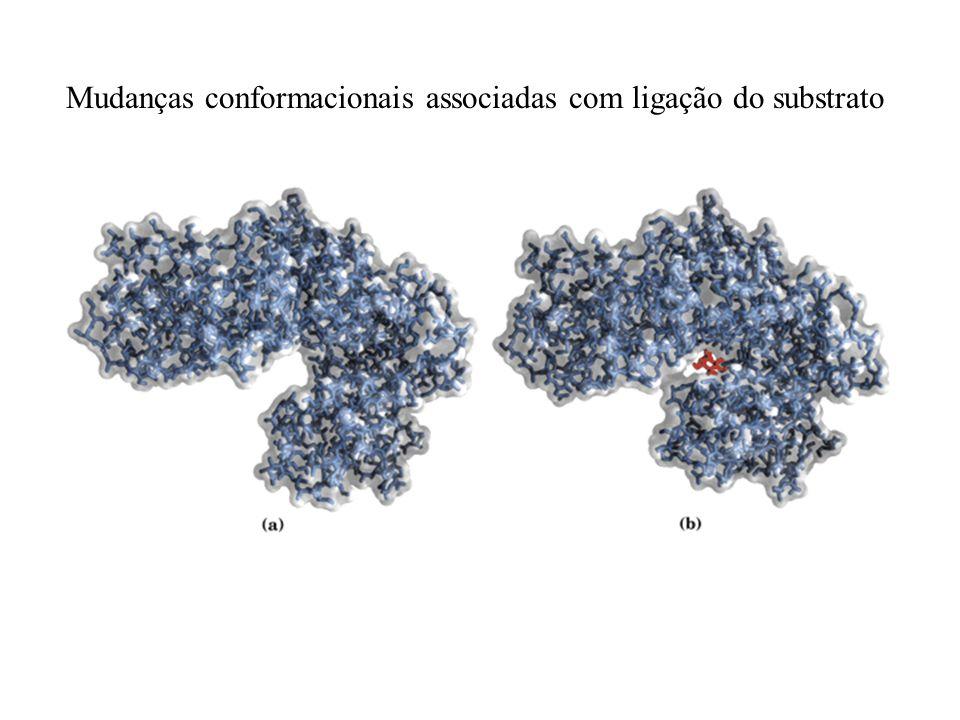 Mudanças conformacionais associadas com ligação do substrato