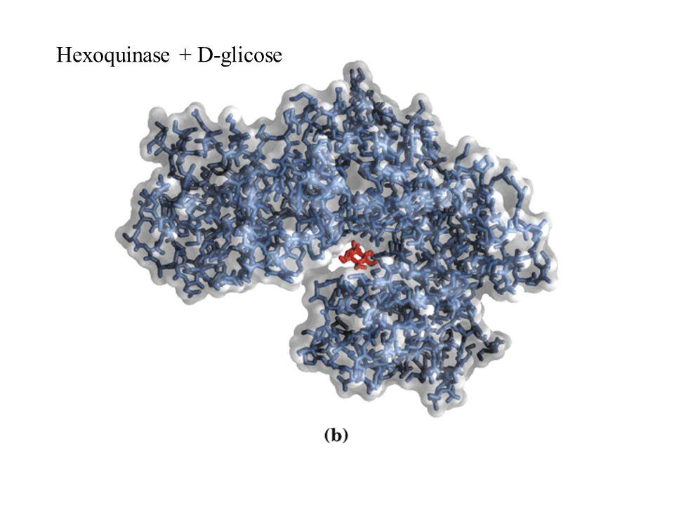 Hexoquinase + D-glicose