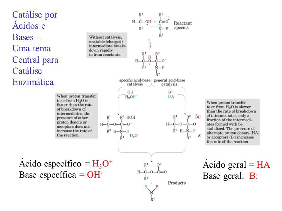 Catálise por Ácidos e. Bases – Uma tema. Central para. Catálise. Enzimática. Ácido específico = H3O+