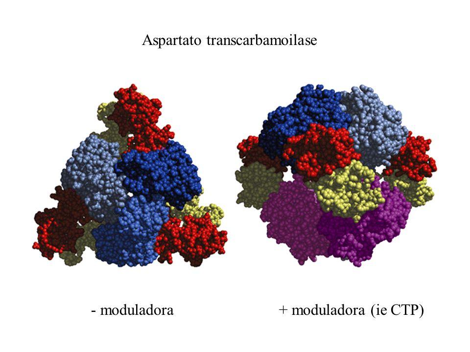 Aspartato transcarbamoilase