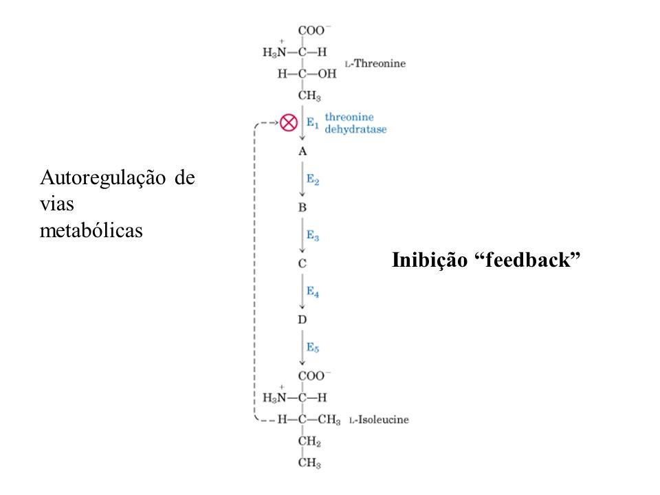 Autoregulação de vias metabólicas Inibição feedback