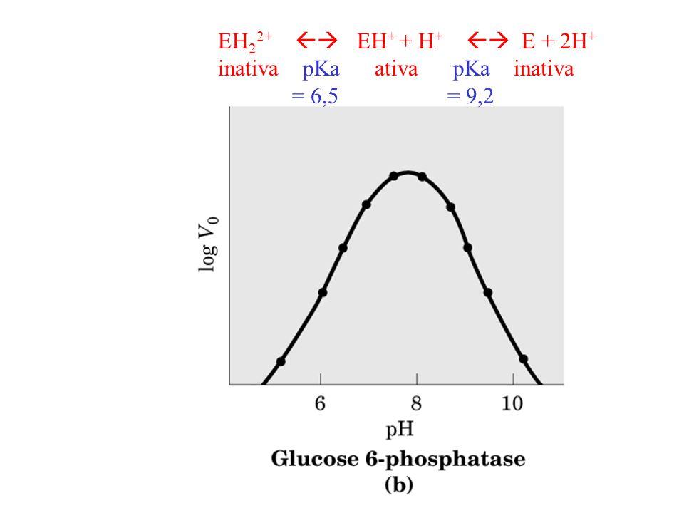EH22+  EH+ + H+  E + 2H+ inativa pKa ativa pKa inativa.