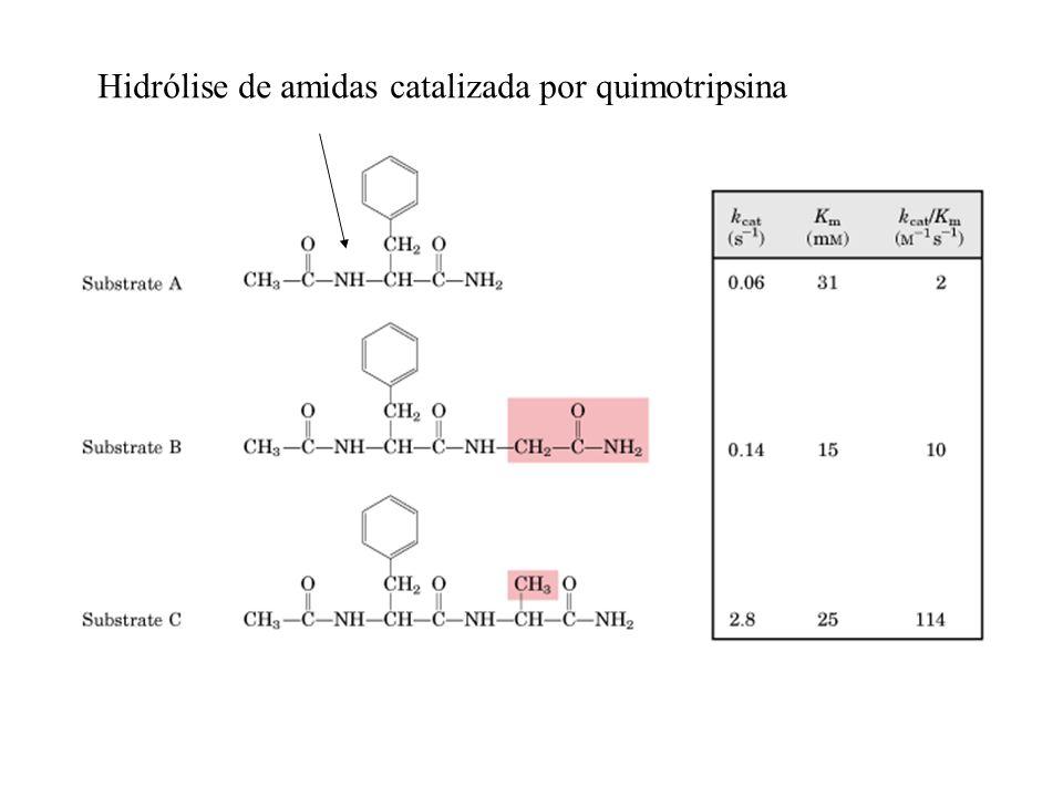 Hidrólise de amidas catalizada por quimotripsina