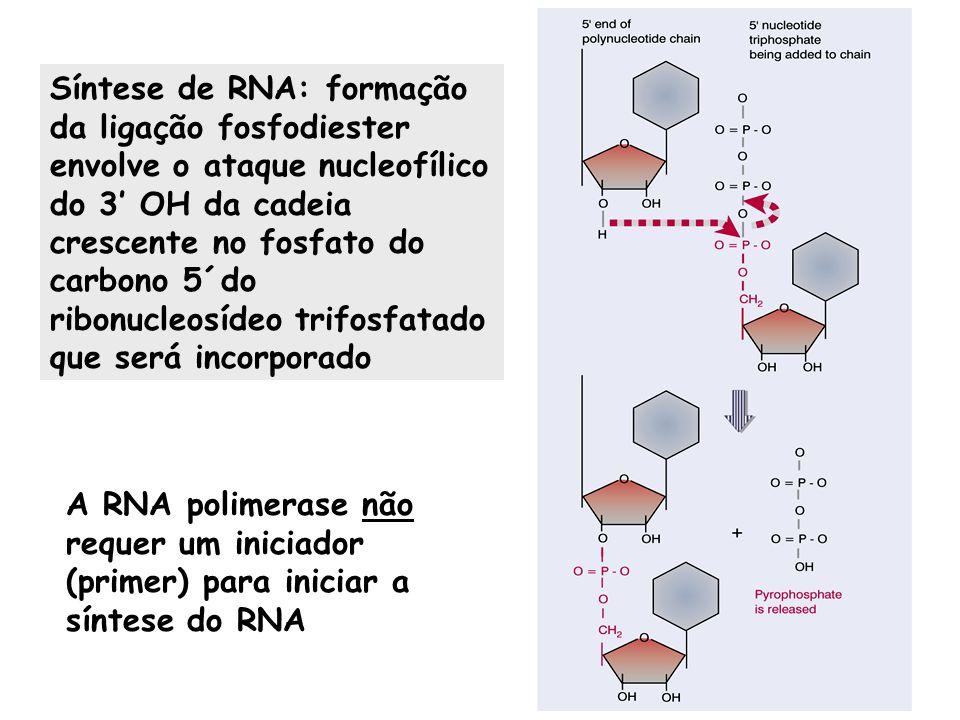 Síntese de RNA: formação da ligação fosfodiester envolve o ataque nucleofílico do 3' OH da cadeia crescente no fosfato do carbono 5´do ribonucleosídeo trifosfatado que será incorporado