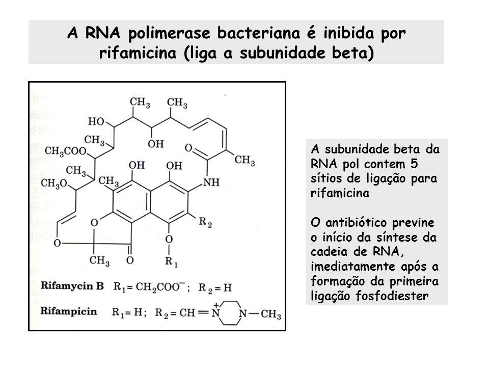 A RNA polimerase bacteriana é inibida por rifamicina (liga a subunidade beta)