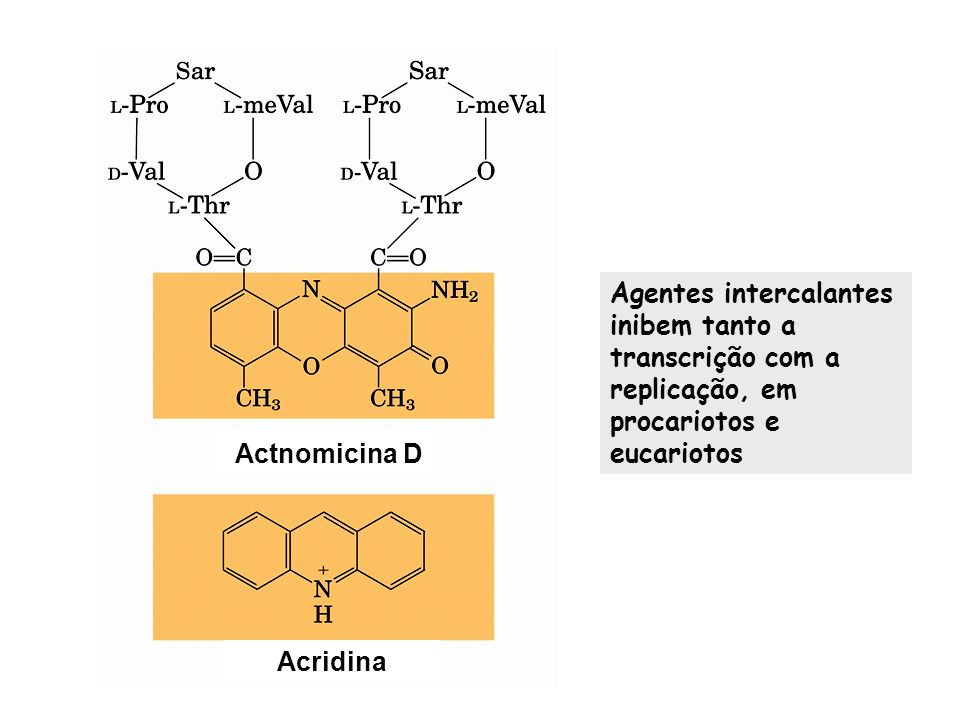 Agentes intercalantes inibem tanto a transcrição com a replicação, em procariotos e eucariotos