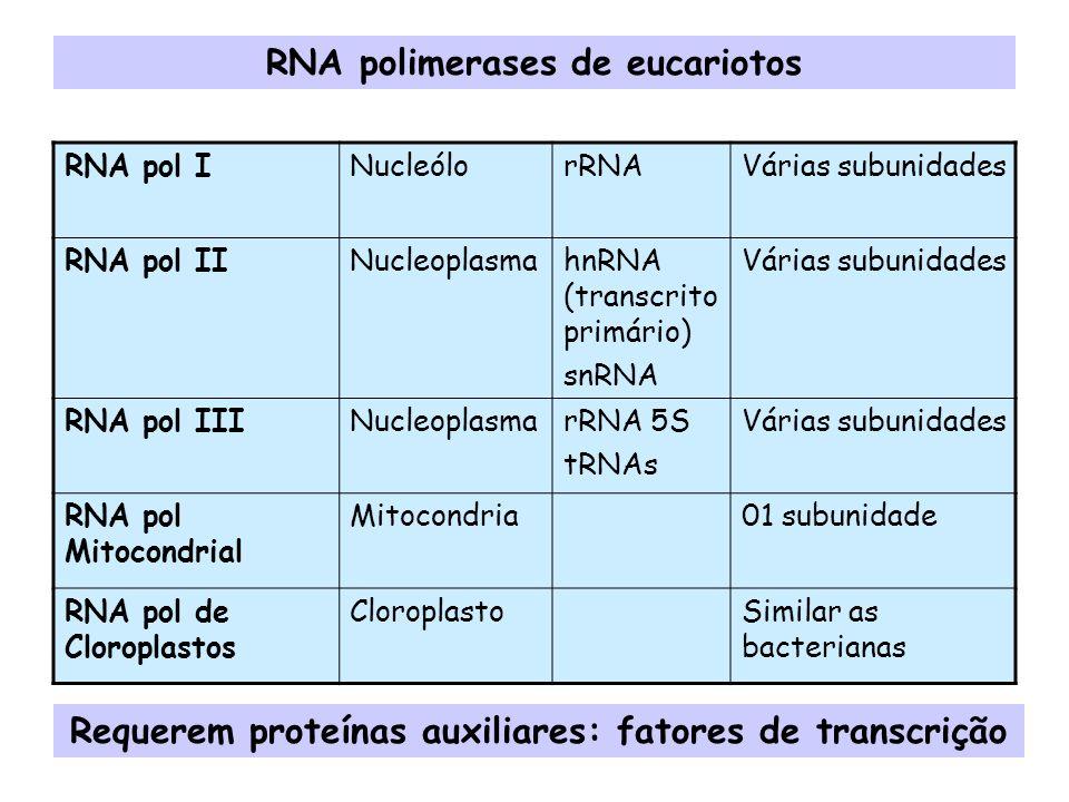 RNA polimerases de eucariotos