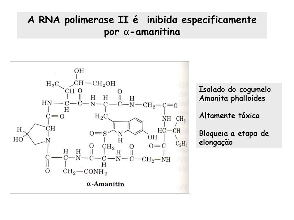 A RNA polimerase II é inibida especificamente por -amanitina