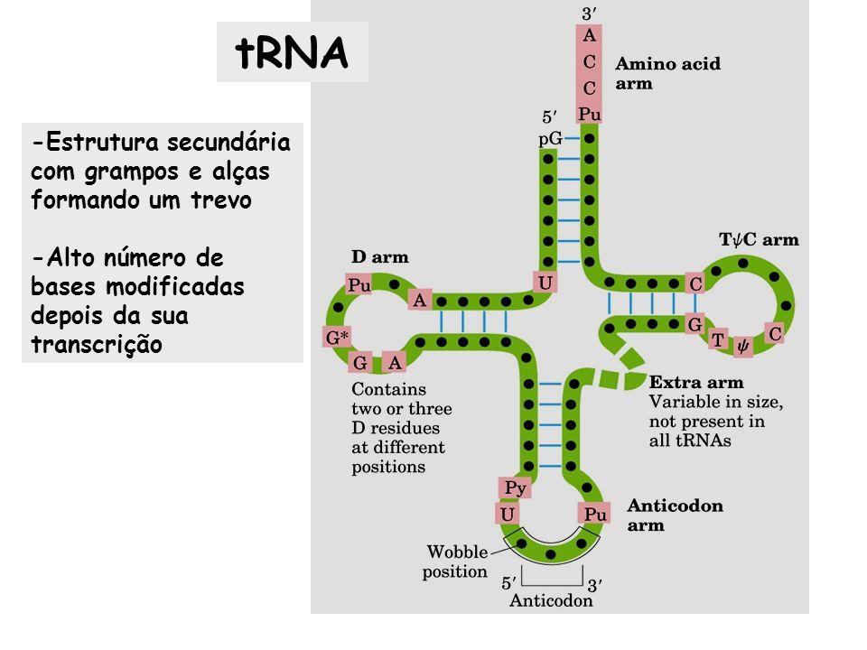 tRNA -Estrutura secundária com grampos e alças formando um trevo