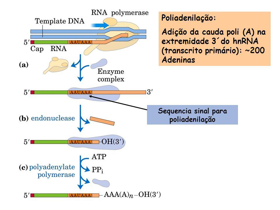 Sequencia sinal para poliadenilação