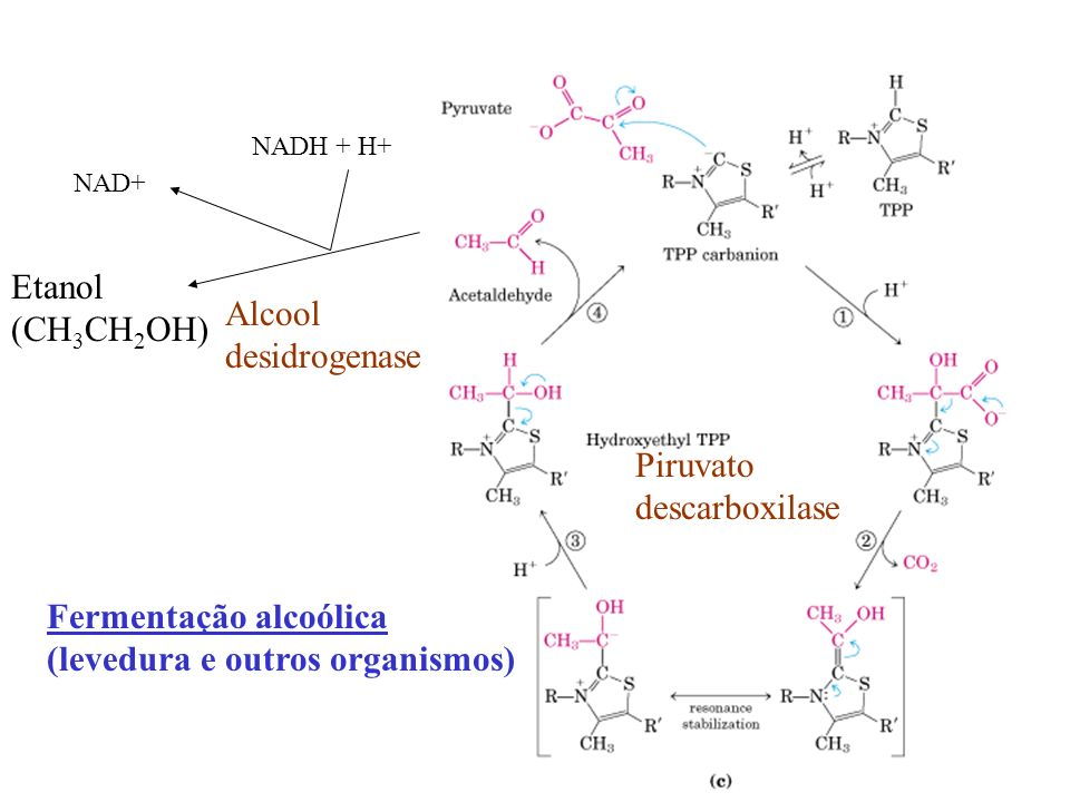 Fermentação alcoólica (levedura e outros organismos)