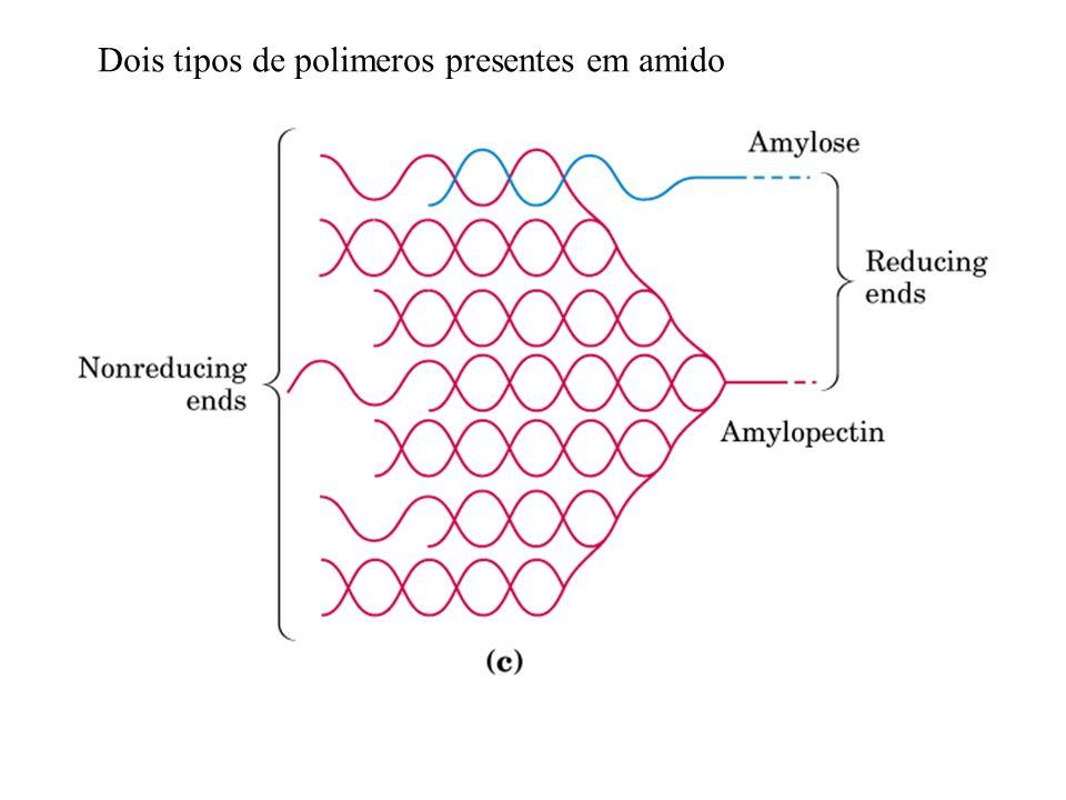 Dois tipos de polimeros presentes em amido