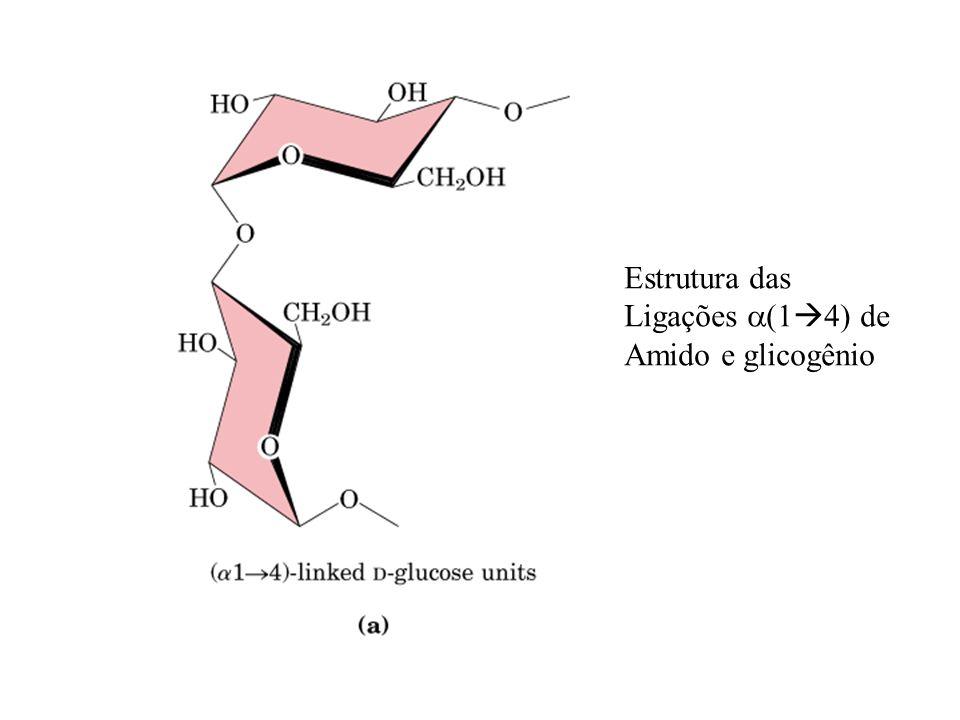 Estrutura das Ligações a(14) de Amido e glicogênio