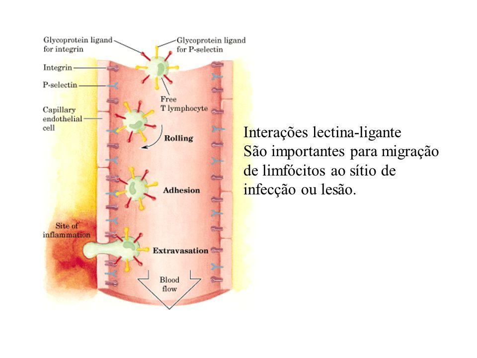 Interações lectina-ligante