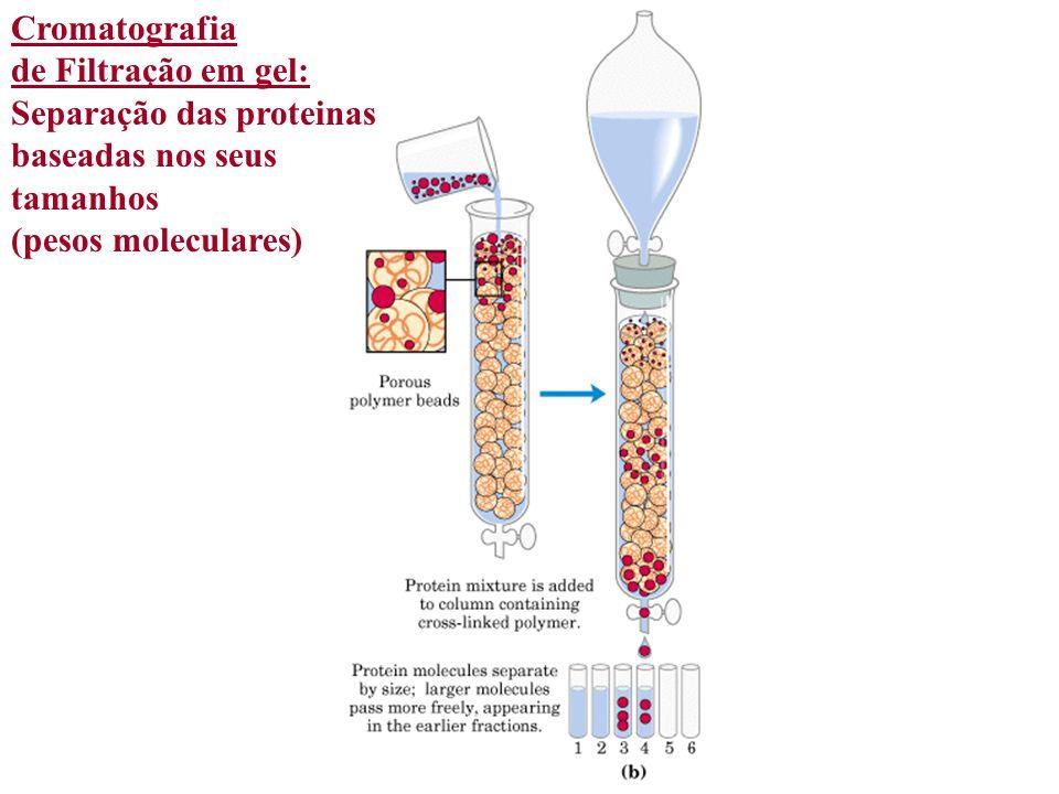 Cromatografia de Filtração em gel: Separação das proteinas.
