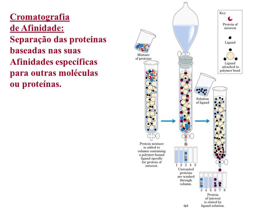 Cromatografia de Afinidade: Separação das proteinas. baseadas nas suas. Afinidades específicas. para outras moléculas.