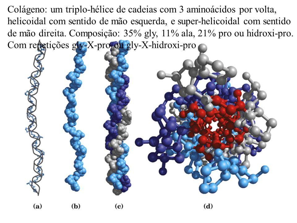 Colágeno: um triplo-hélice de cadeias com 3 aminoácidos por volta,