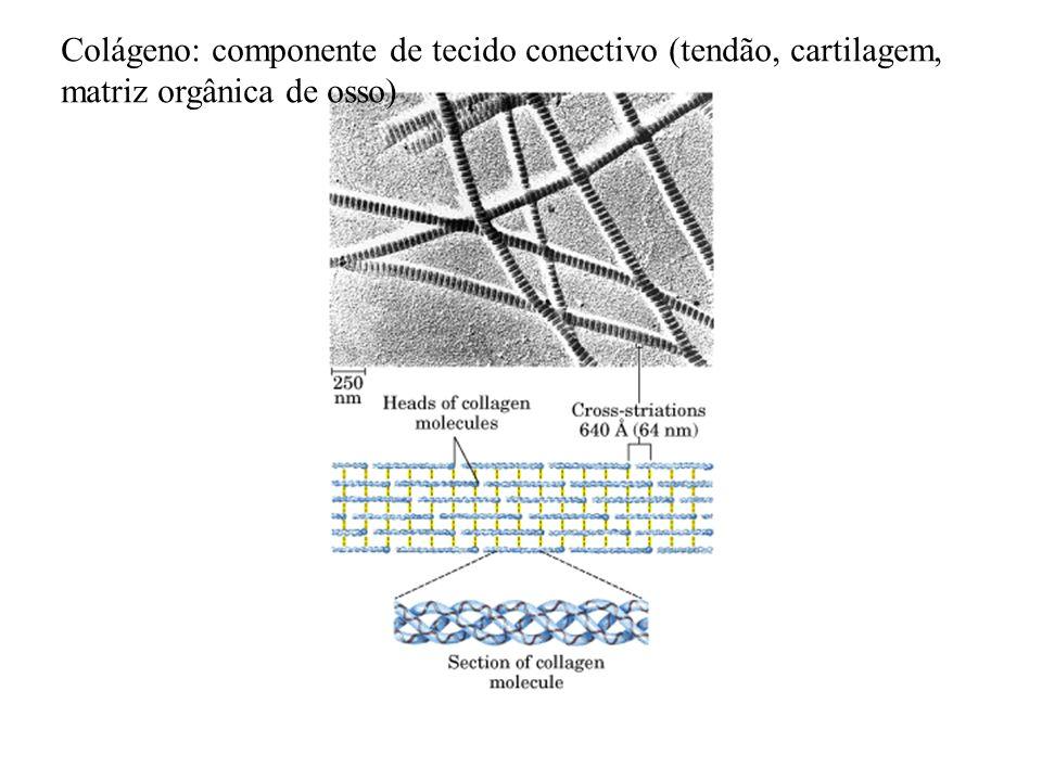 Colágeno: componente de tecido conectivo (tendão, cartilagem,