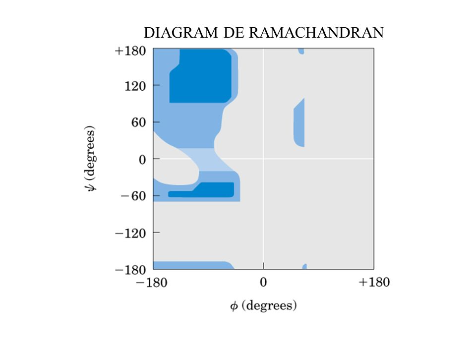 DIAGRAM DE RAMACHANDRAN