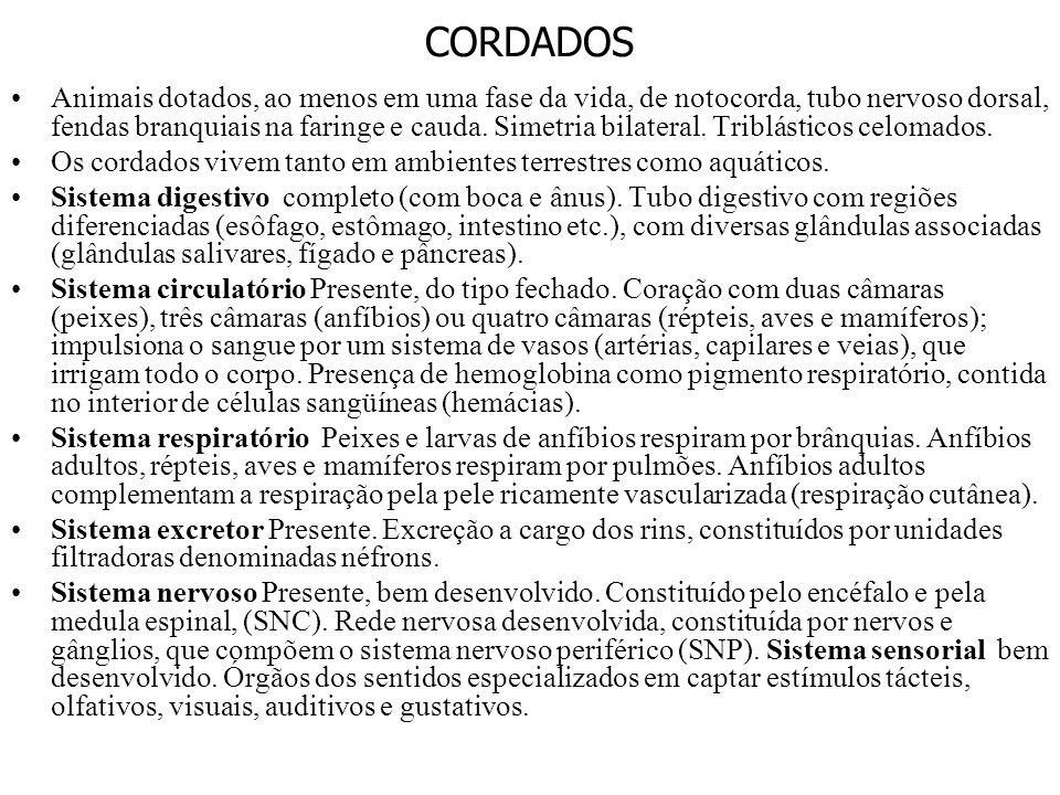 CORDADOS
