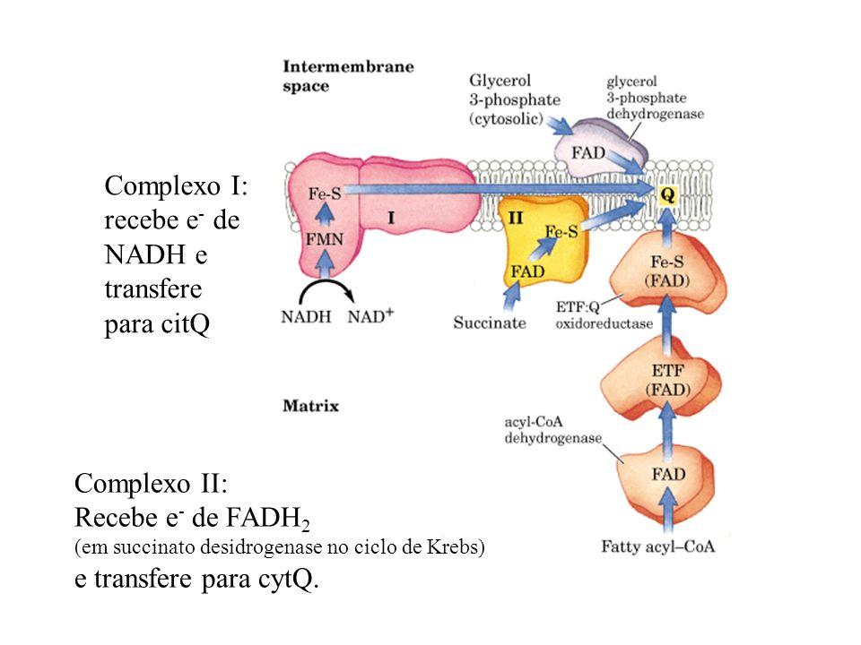 Complexo I: recebe e- de NADH e transfere para citQ Complexo II: