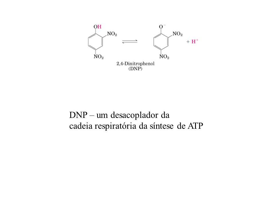 DNP – um desacoplador da