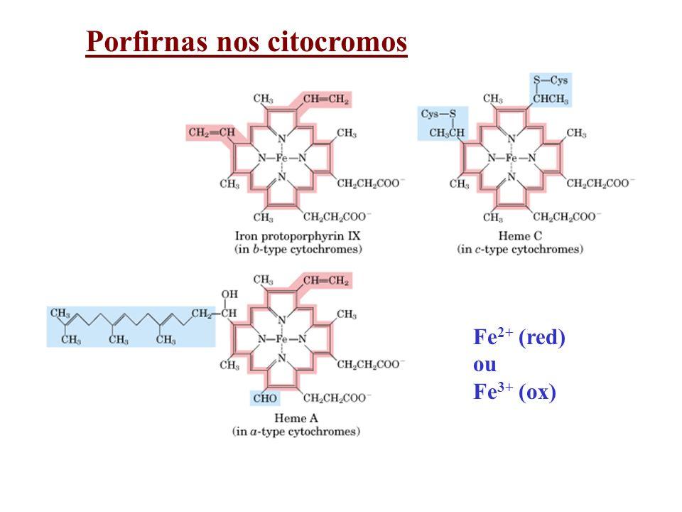 Porfirnas nos citocromos