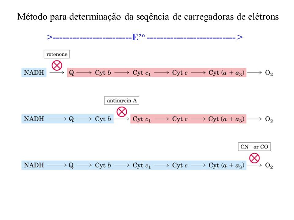 Método para determinação da seqência de carregadoras de elétrons