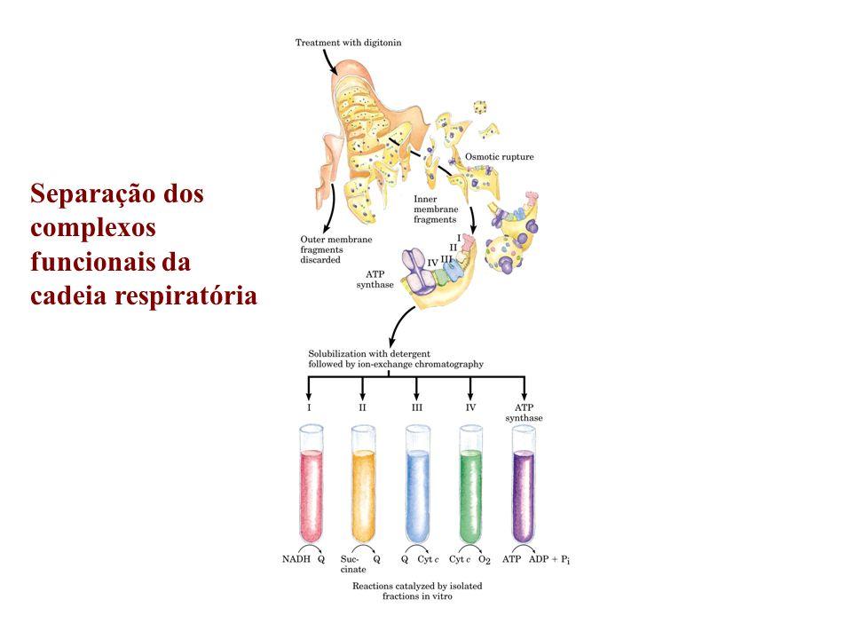Separação dos complexos funcionais da cadeia respiratória