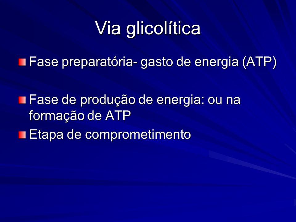 Via glicolítica Fase preparatória- gasto de energia (ATP)