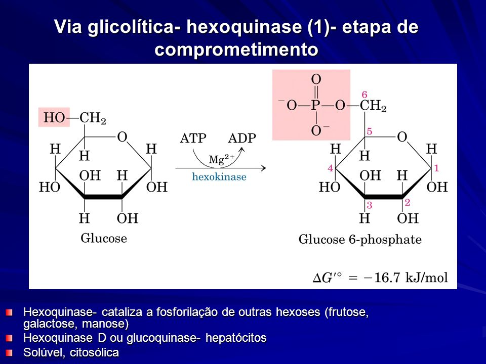 Via glicolítica- hexoquinase (1)- etapa de comprometimento