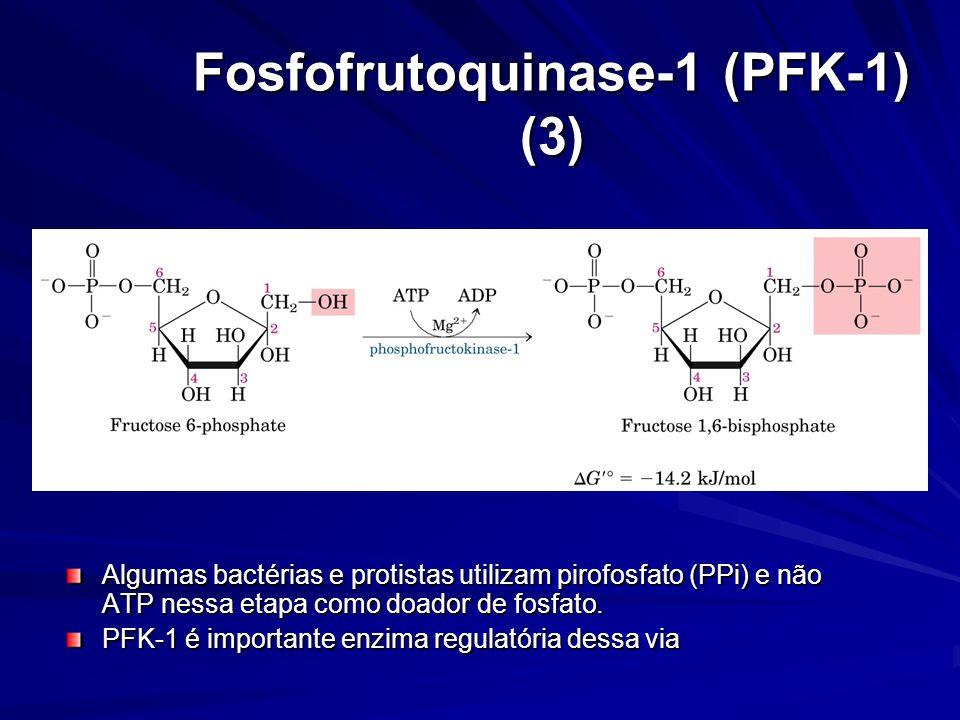 Fosfofrutoquinase-1 (PFK-1) (3)